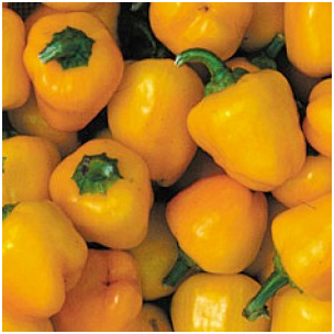 Chiles mini bell amarillo