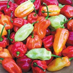 Chiles Habanero Tobago Seasoning