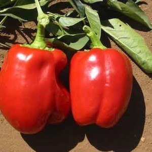 Chiles Big Red