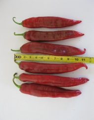 Chiles Numex Big Jim