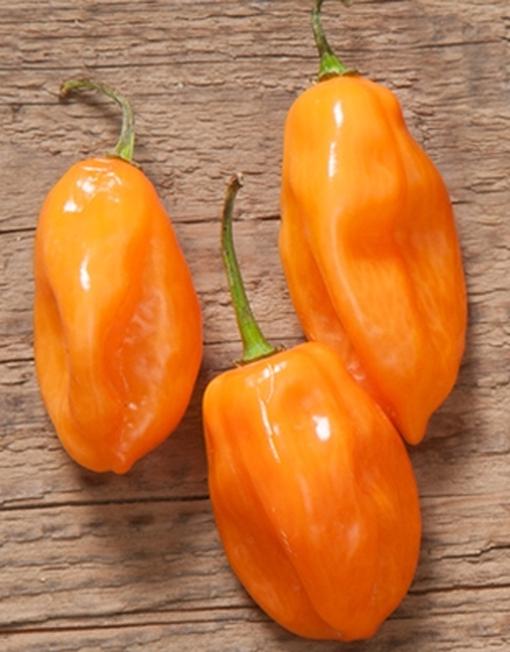 Chiles Habanero Naranja