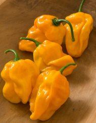 Semillas Numex Suave Naranja