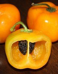 Chiles rocoto naranja