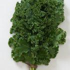 Semillas Kale Verde Orgánico