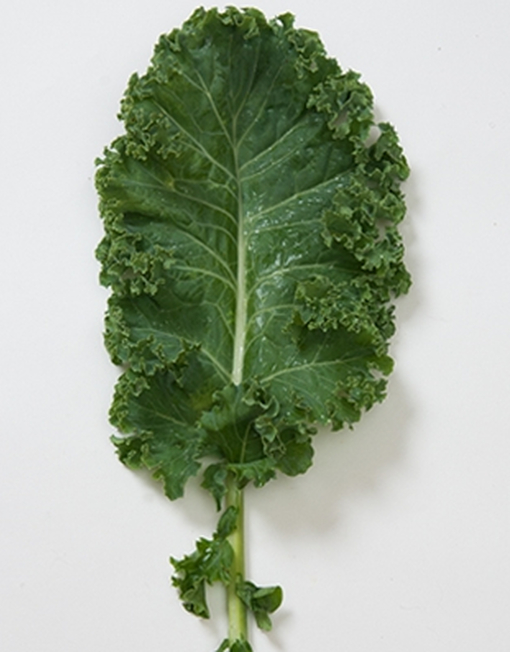 Hoja de Kale Orgánico Argentina