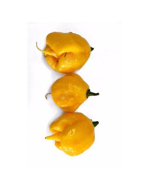 3 Carolina Reaper Amarillos