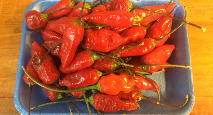 pimientas rojas en bandeja azul