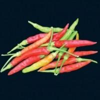 Chiles burapa tailandés