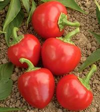 Chiles Cherry Bomb