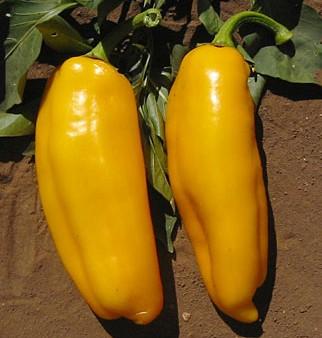 Chiles marconi dorado