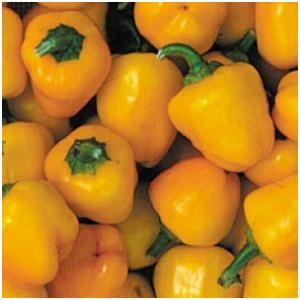 Chiles mini bell amarillo