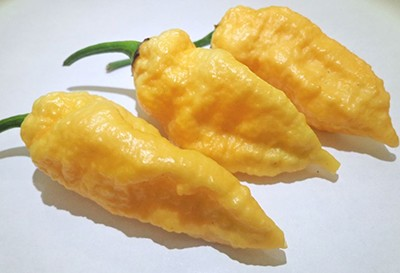 Chiles Naga Jolokia Peach