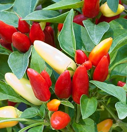 Chiles Prairie Fire