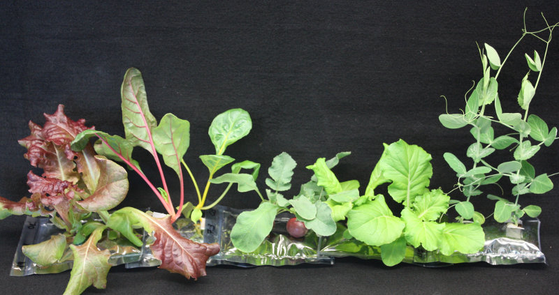 Cultivos en el espacio