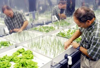 cultivos en el espacio hidroponicos