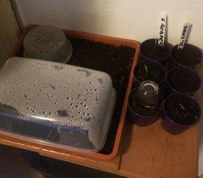 humedad para la germinación