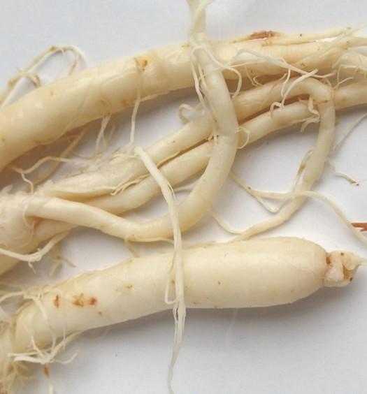 La raíz ginseng