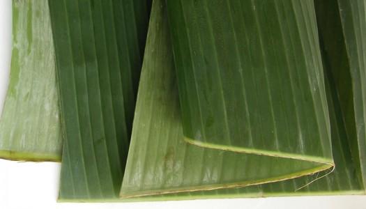Hoja de plátano (pisang daun)