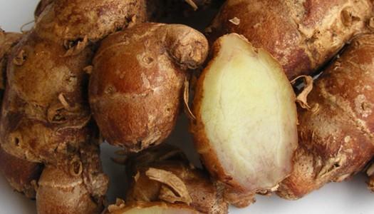 Kaempferia galanga (kencur)