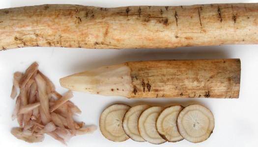 La raíz de bardana (gobo o bardana)
