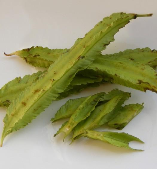 Porotos de goa (frijol alado)