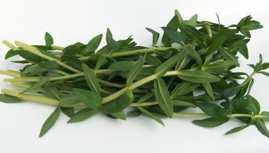 Rau Om (hierba de arroz)