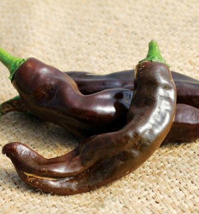Chiles marrones de Etiopía 2