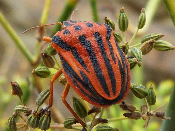 Escarabajo en una planta