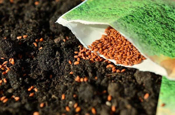 Sembrando semillas híbridas de un paquete