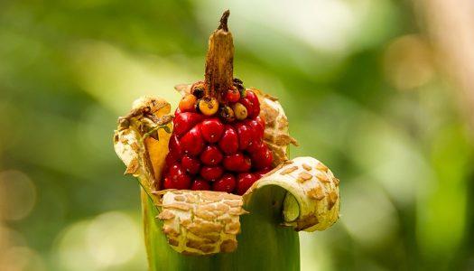La diferencia entre semillas orgánicas, híbridas y transgénicas