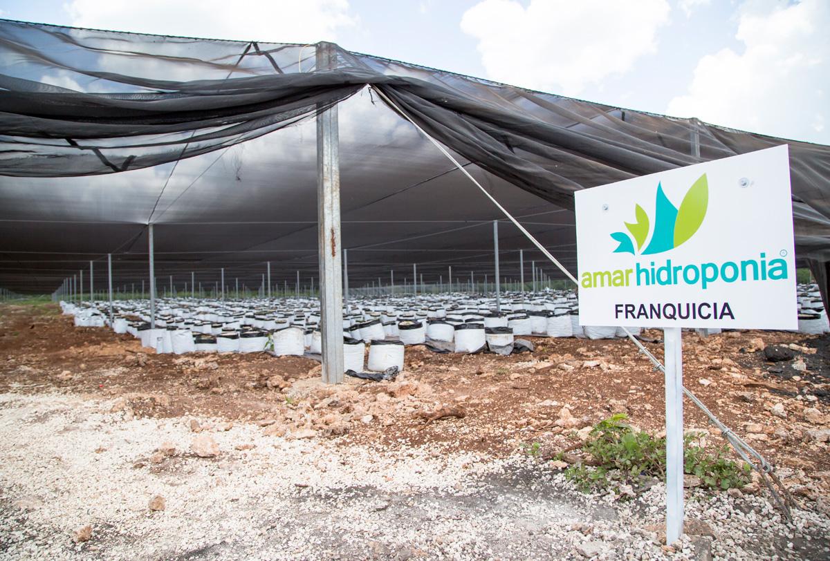 Empresa Amar Hidroponia México