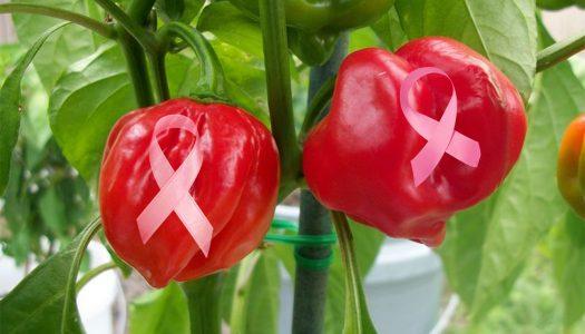 La capsaicina en los chiles picantes puede detener el cáncer de mama