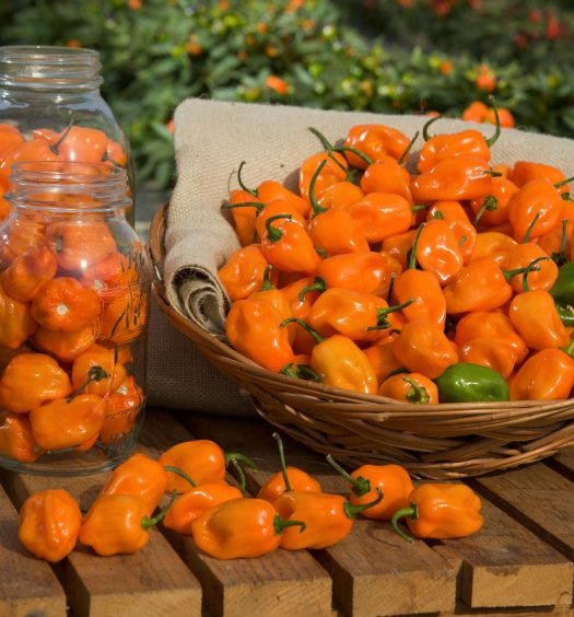 Cestita con habaneros naranja frescos