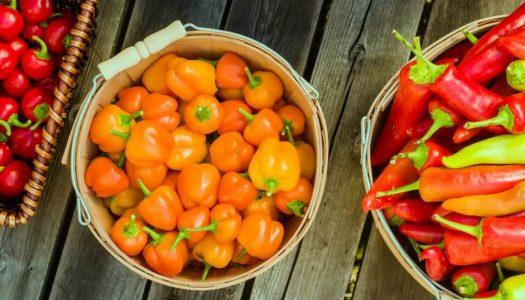 Guía de Picante para Chiles y Pimientos