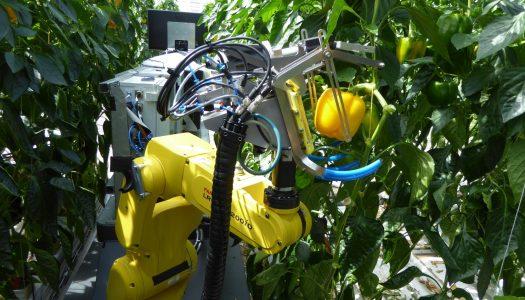 En Holanda crean robot que cosecha chiles